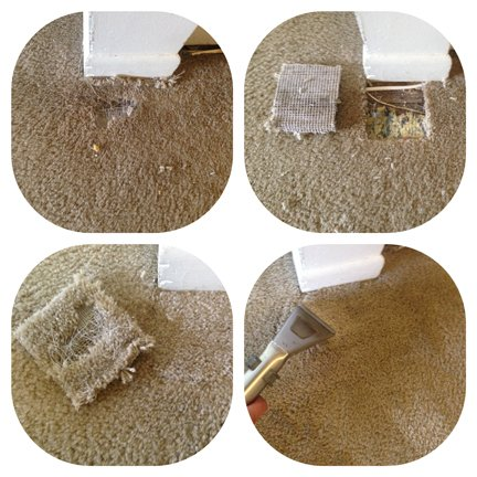 Carpet Repair Oak Ridge FL
